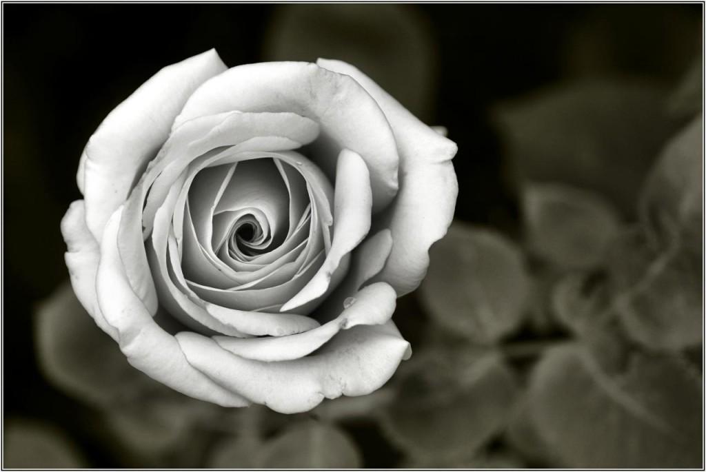 První jeho román se jmenuje Jméno růže. Autor: Josef Stueter