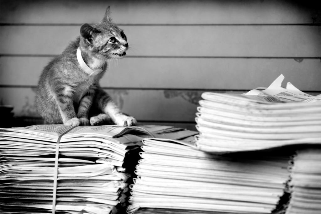 Koťátko a noviny.