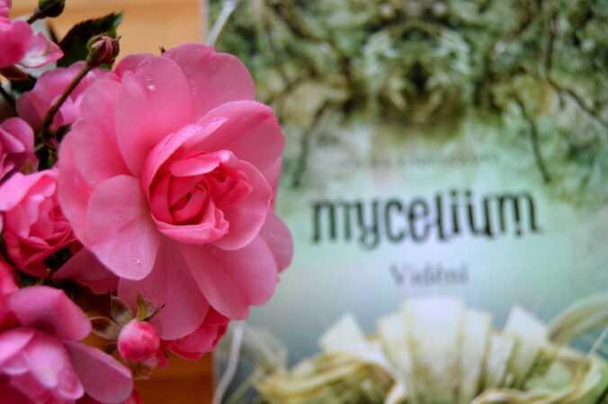 Mycelium Vidění